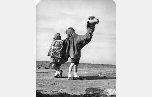 Pekka ja Pätkä kaksikyttyräisenä kamelina.