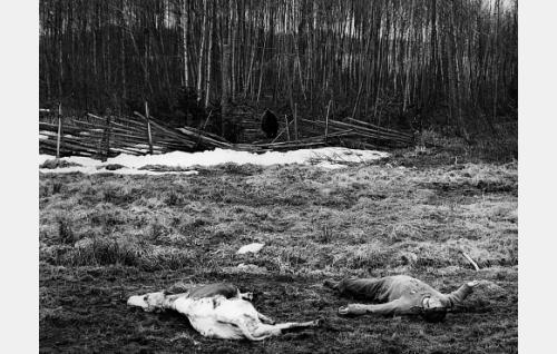 Elokuvan päätösjakso: karhu on tappanut Korpiloukon ainoan lehmän ja hätiin rientäneen Topi Romppasen (Holger Salin).