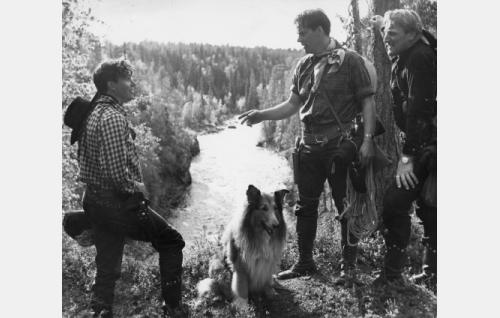 Taneli Rinne, Tommi Rinne ja Åke Lindman sekä elokuvan leikkaajan Elmer Lahden Skotlannin paimenkoira Kim av Silfvertass.