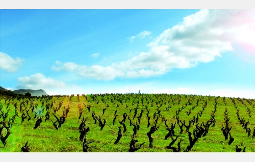 Remellurin viiniviljelmät La Riojassa. © Rax Rinnekangas.