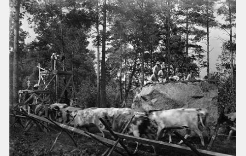 """Viertolan härät piirittävät veljeksiä Hiidenkivellä. Kivi on vartavasten kuvauksia varten rakennettu ja tilapäinen piikkilanka-aita pitää """"härät"""" kuvausten ajan riittävän lähellä kiveä. Kuvausryhmä, ohjaaja Wilho Ilmari, kuvaaja Eino Kari ja kamera-assistentti Unto Kumpulainen, on korkean telineen päällä, alatasanteella Pyhäniemen kartanon omistajan, agronomi Paavo Pätiälän lapset seuraavat tapahtumia. Kamera on Cinephon."""