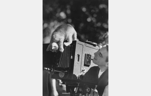 Utelias kissanpentu taiteilee kuvaaja Marius Raichin Debrie Super Parvo- kameran vastavalosuojan päällä.